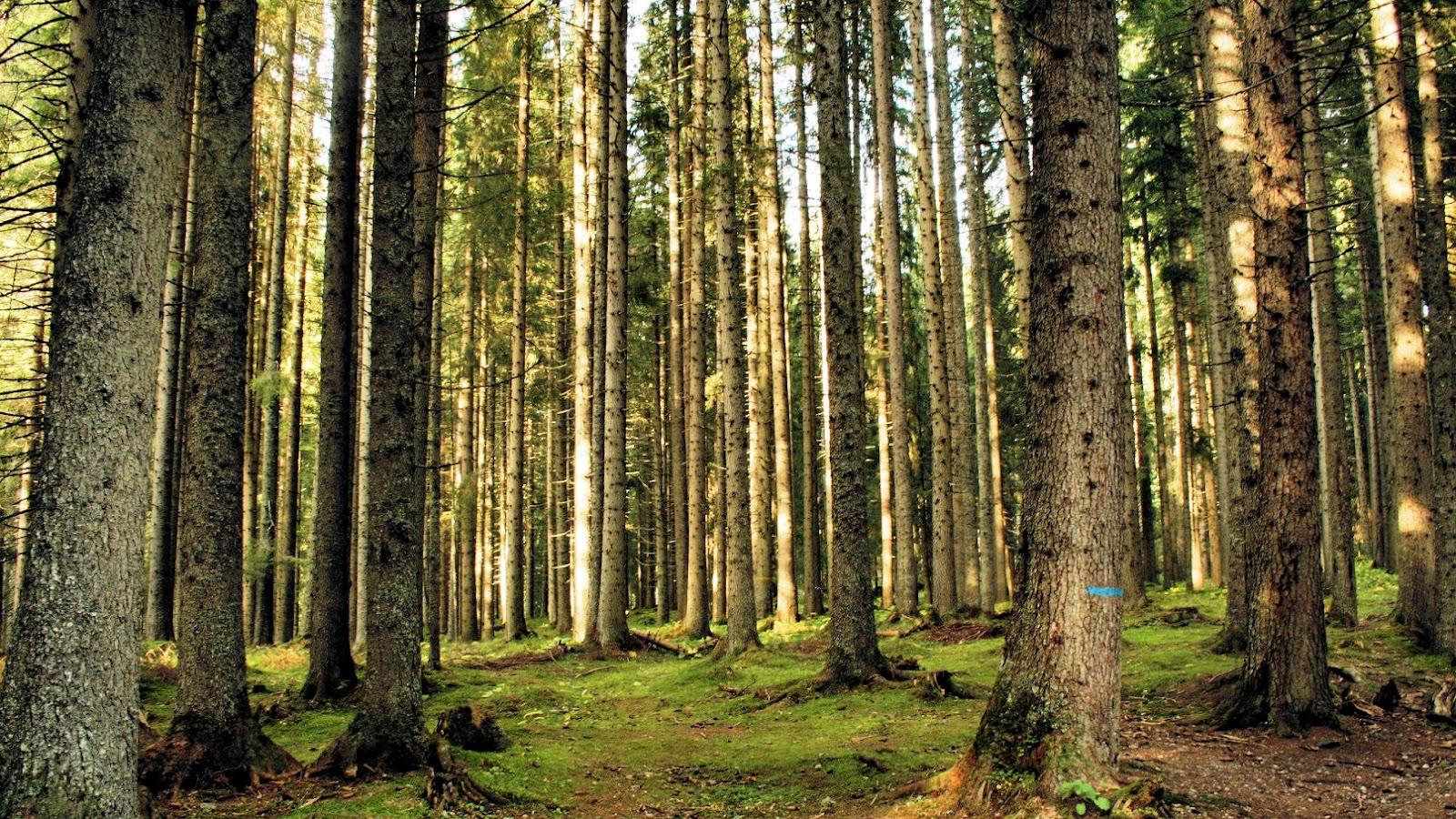 La foresta della Val di Fiemme