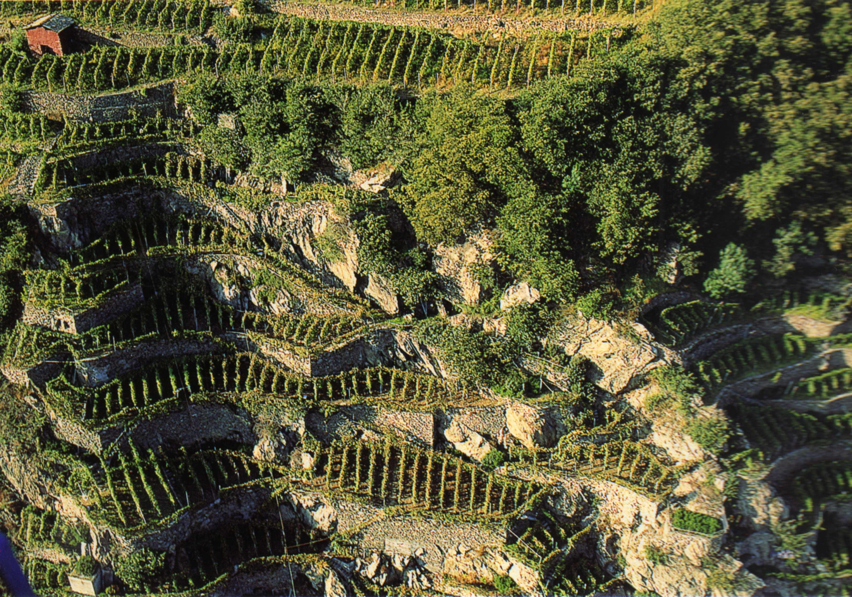 La viticoltura in Valtellina