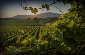 Produzione del vino Franciacorta