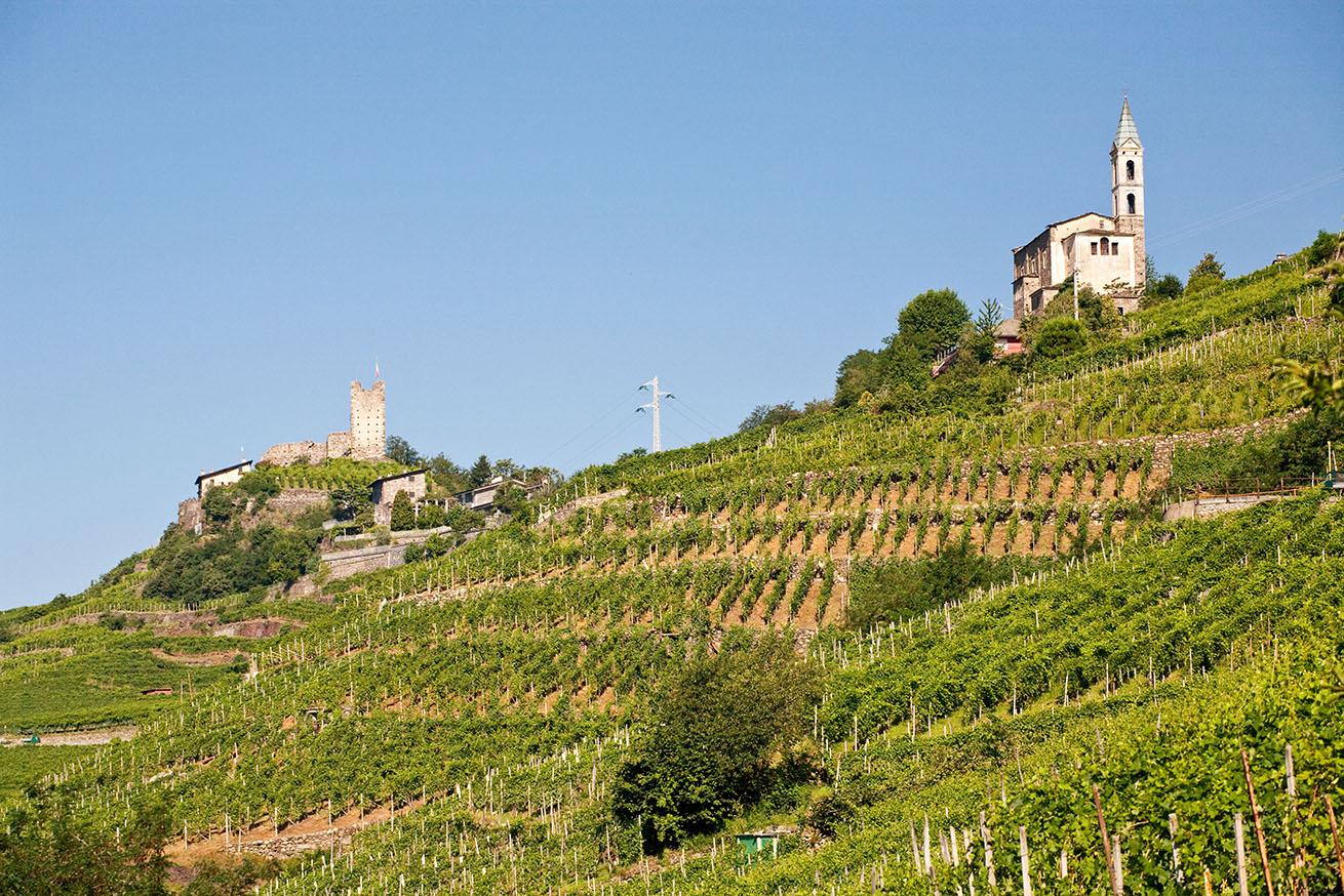 vino Valtellina Superiore